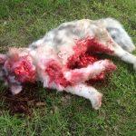 Tierdummies SFX Tote Katze