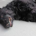 Tierdummies SFX Toter Hund liegend