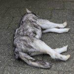 Tierdummies SFX Toter Hund
