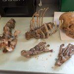 Skeletteile SFX