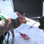 On Set with animatronic Deer