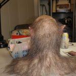 Werwolf Haare Dummie Büste FX Maskenbild