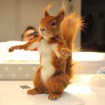 Bewegliche Eichhörnchen Tier Dummie SFX Puppe Filmtier künstliche Tiere