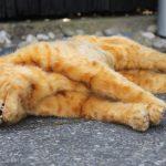 Tote rote Katze Tier Dummie SFX movieSFX Film TV Spezialeffekte
