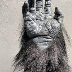 SFX Maskenbild Gorilla Hand, Arm Handschuh SFX Filmeffekte movieSFX Silikon Spezialeffekte